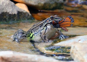 """The Frog and the Princess""""Gotcha, baby"""