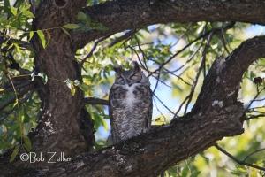 Owl - after using Safari Flash booster.
