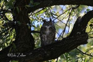 Owl - before using the Safari Flash Booster.