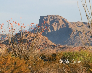 Sunrise in the desert of the Big Bend.