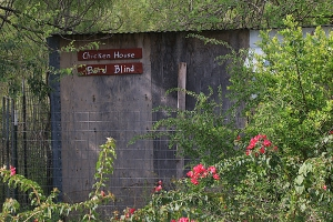 Bob Shackleford's bird blind