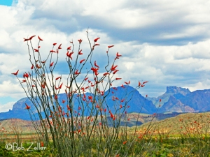 Ocotillo and the Chisos Mountains.  You can see Mt. Casa Grande in the distance.
