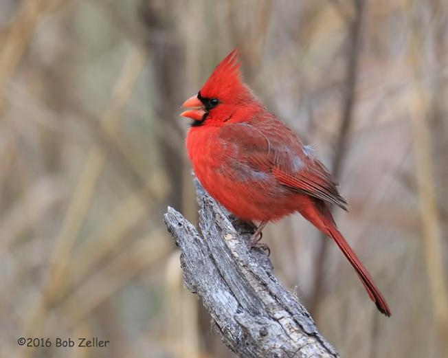 4g7a8881-net-cardinal-bob-zeller