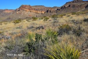 Desert Landscape - 1/640 sec. @ f8, +0.7 EV, I SO 200.