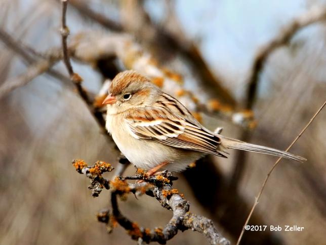 1Y7A3256-net-sparrow-field-bob-zeller