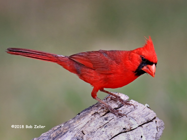 1Y7A8217-net-cardinal-bob-zeller