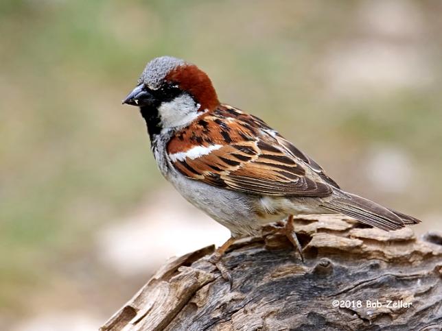 1Y7A8298-net-sparrow-house-bob-zeller