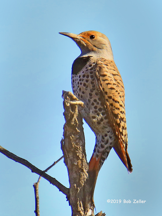 1Y7A3089-net-flicker-bob-zeller