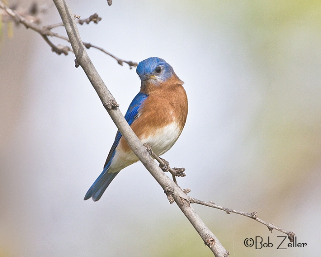 IMG_2072_blog-bluebird-east-bob-zeller