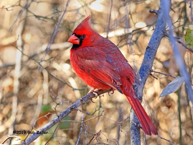 1Y7A1256-net-cardinal-bob-zeller